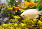 freshwater fish shop